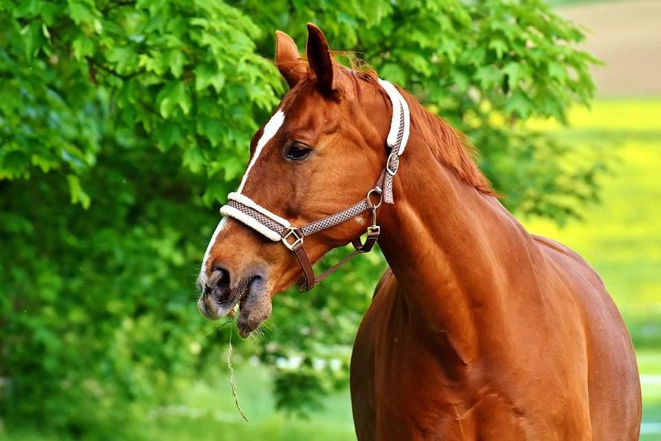 horse-2344505_960_720