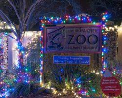 Wild Nights & Holiday Lights